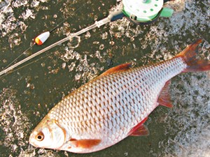 Зимняя поплавочная ловля