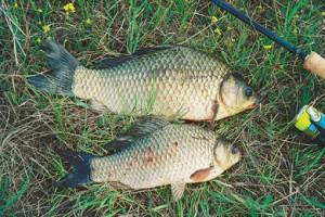 видео рыбалка ловля щуки