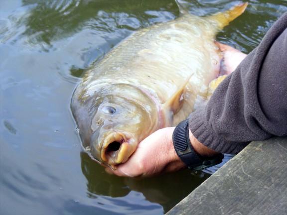 какая рыба клюет в белгороде