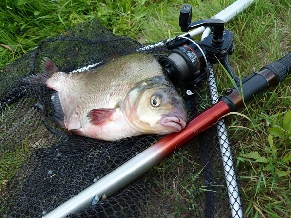 Картинки по запросу рыбалка на леща