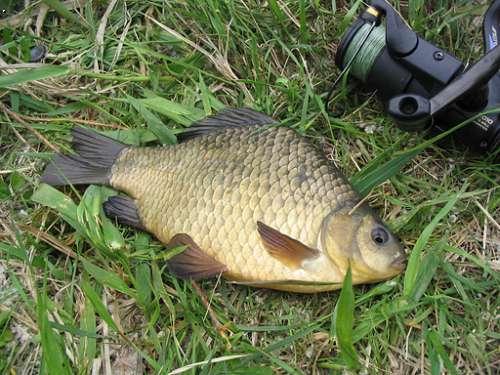 прикормка из гречки для рыбалки