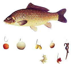 рецепт прикормки для рыбы