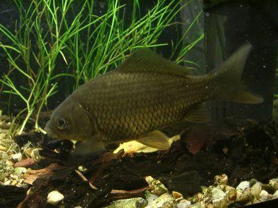 прикормка fish hungry