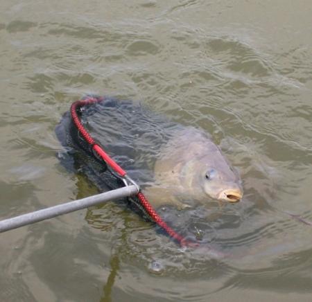 Ловля мирной рыбы (плотвы, карася и подлещика) поздней осенью.