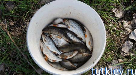 рыбалка в губкинском районе осколец