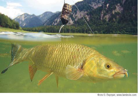 как разводить прикормку для рыбы
