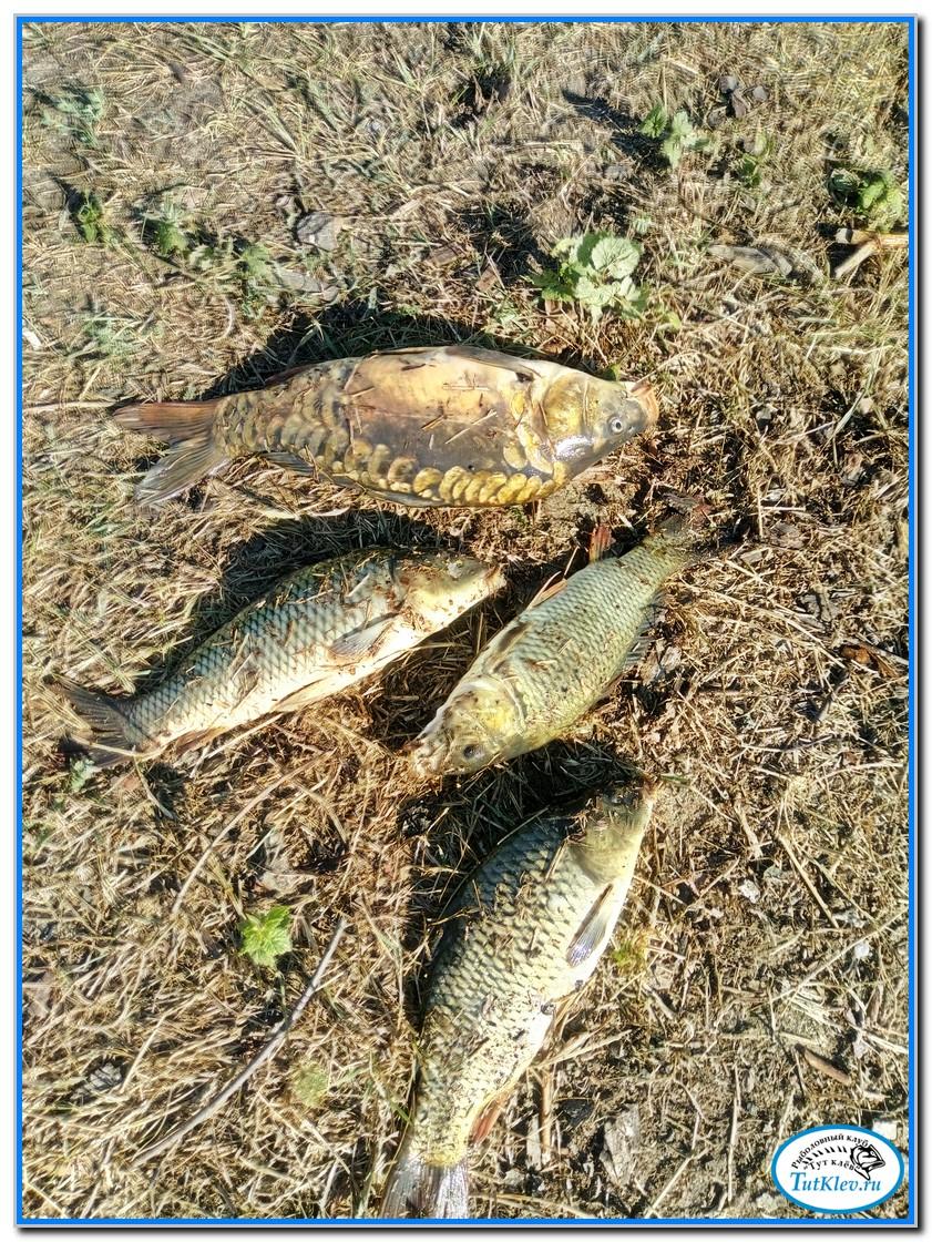 рыболовы соснового бора